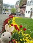 Tulips were everywhere too.