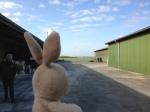 We saw a dairy farm!
