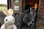 Donkeys too!