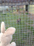 I found some interesting things while walking around... even a kangaroo!