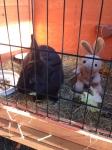 A bunny! Just like me!