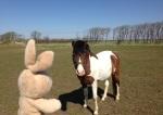 This farm had lots of horses.