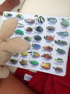 I learned all about the native fishies.